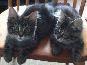 Kittens of Kattero